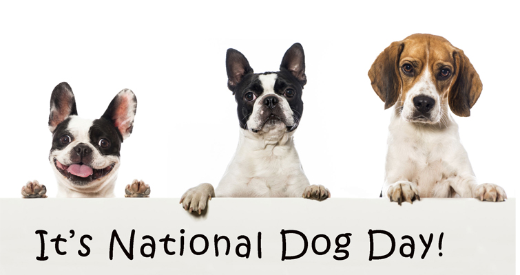 International Guide Dog Day